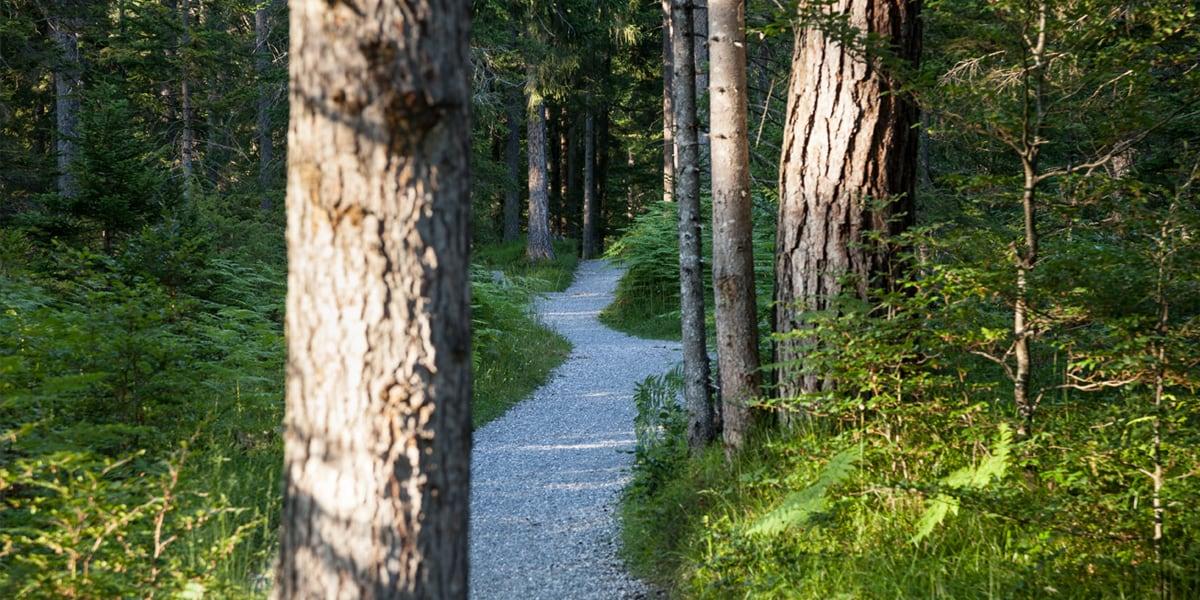 Die Wanderroute nach Ehrwald