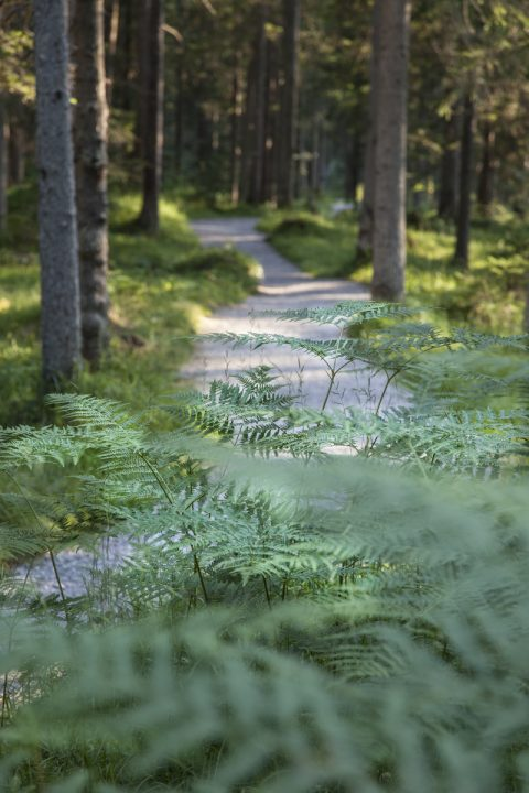 Wanderroute kurz vor dem Ehrwalder Becken