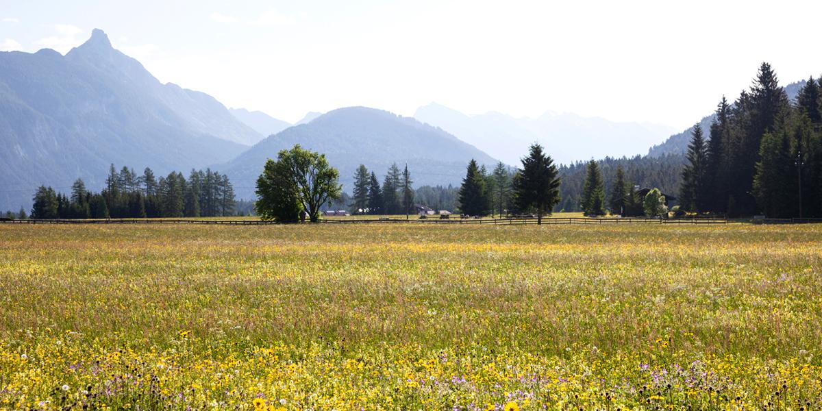 Blumenwiese in der Leutasch