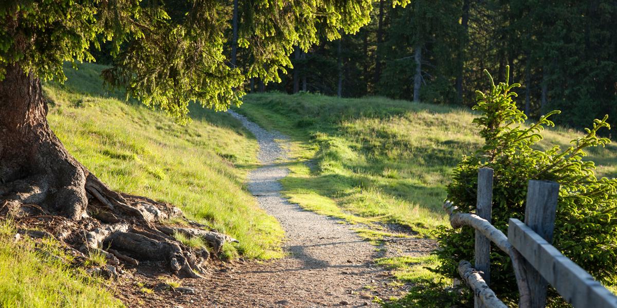 Wanderroute kurz nach dem Etappenstart