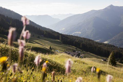 Blick zur Freundalm - Im Hintergrund die Dolomiten