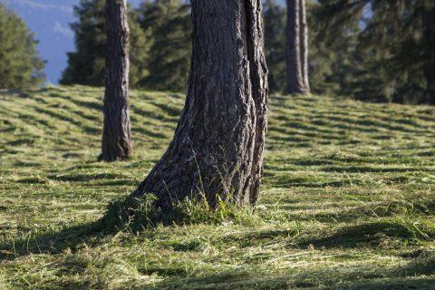 Lärchenwiesen am Salten